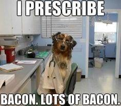 dog veterinarian picture