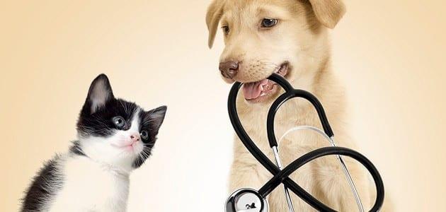 pet cloning health