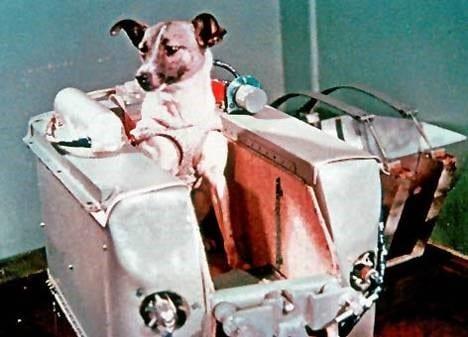 laika-the-space-dog