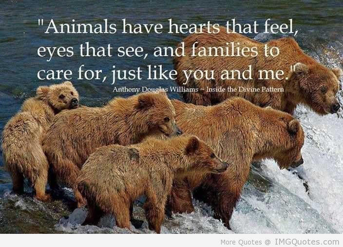Hurricane Harvey Animals Need Help Too