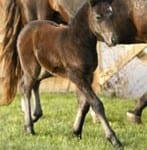 Young Horse Cloning
