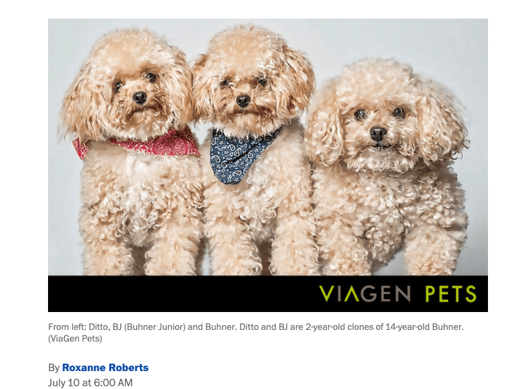 Clone Dog Washington Post